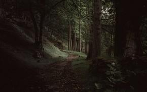 Картинка лес, деревья, природа, Шотландия, тропинка, Loch Maree, Achnasheen