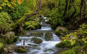 Картинка лес, ручей, Франция, речка, каскад