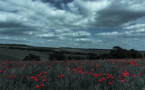 Картинка поле, лето, небо, облака, цветы, маки, обработка, красные, алые, маковое поле, голубой фильтр