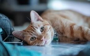 Картинка кошка, кот, взгляд, рыжий, мордочка, котейка