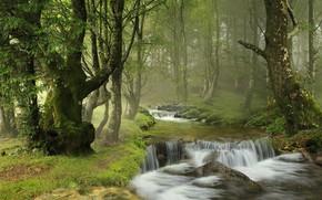 Картинка лес, деревья, река, водопад, Испания, каскад, Spain, Наварра, Navarre