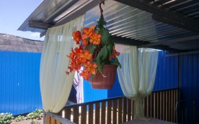 Картинка цветок, Беседка, шторы