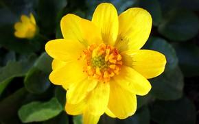 Картинка цветок, весна, апрель