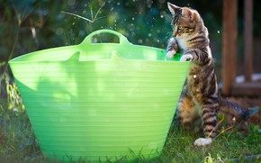 Картинка лето, поза, котенок, сад, таз