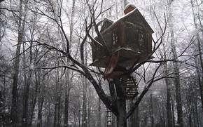 Картинка лес, снег, деревья, постройка, Tree House