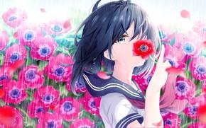 Картинка Цветы, Маки, Девочка, haru (re ilust)
