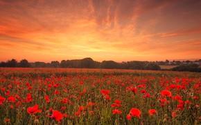 Картинка поле, небо, облака, деревья, пейзаж, закат, цветы, природа, настроение, мак, маки, красота, вечер, красные, алые, ...