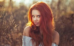 Картинка взгляд, девушка, лицо, волосы, портрет, рыжая, плечи, рыжеволосая, боке, Wojtek Polaczkiewicz, Wiktoria Gajzler