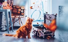 Картинка кошка, кот, взгляд, морда, бабочки, комната, рыжий, картины, пол, профиль, чемодан, сидит, много, помещение, охотник, …