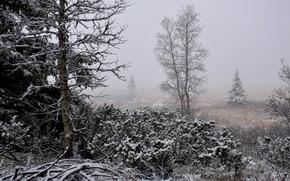 Картинка зима, снег, пейзаж, природа, туман, красота