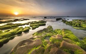 Обои море, небо, солнце, водоросли, пейзаж, закат, природа, камни, рассвет, берег, побережье, горизонт, водоем, каменистый берег