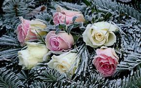 Картинка иней, цветы, розы, хвоя