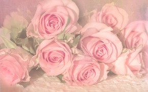 Картинка розы, букет, лежат