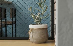 Картинка уют, растение, домашний уют, минимализим