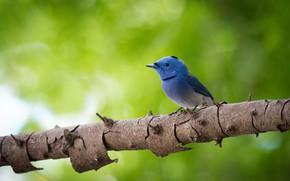 Картинка дерево, птица, боке