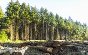 Картинка лес, природа, брёвна
