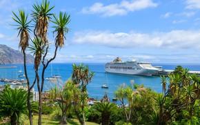 Картинка море, пальмы, остров, лайнер, Мадейра