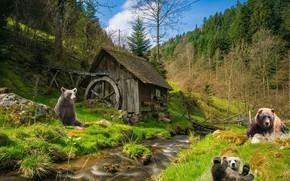 Картинка лес, рендеринг, медведи, мельница, водяная мельница, мишки