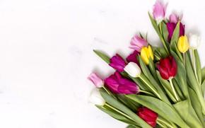 Картинка цветы, colorful, тюльпаны, розовые, pink, flowers, tulips, spring, purple