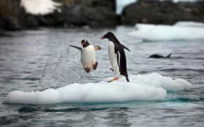 Картинка снег, брызги, природа, океан, пингвины, льды, пара, Антарктика, Александр Перов