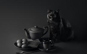 Обои кошка, глаза, усы, взгляд, стол, фон, завтрак, мордочка, cat, background, look, breakfast, table, black cat, ...