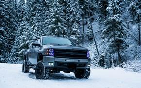 Картинка зима, снег, деревья, Chevrolet, внедорожник, trees, пикап, winter, snow, SUV, pickup truck