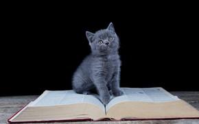 Картинка взгляд, книга, черный фон, котёнок, сидит