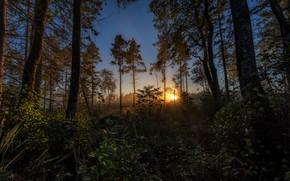 Картинка лес, солнце, свет, деревья, закат, ветки, заросли, листва, кусты