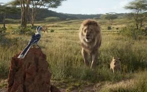 Картинка птица, Король Лев, Симба, The Lion King, Муфаса