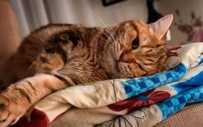 Картинка кошка, глаза, кот, взгляд, поза, уют, дом, фон, комната, отдых, лапа, лапы, рыжий, постель, лежит, …