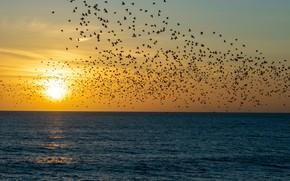 Картинка море, солнце, закат, птицы, природа, стая, полёт