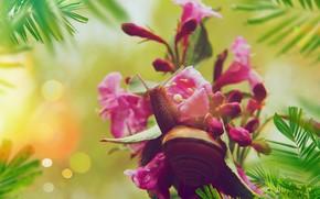 Картинка листья, макро, цветы, улитка, розовые, боке
