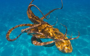 Картинка море, вода, свет, осьминог, подводный мир, под водой, голубой фон, плавание