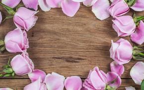 Картинка цветы, фон, нежность, лепестки, розовые розы