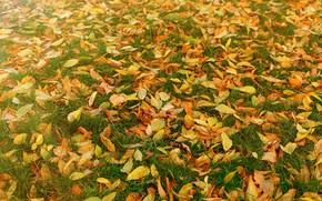 Картинка осень, трава, листья, фон, желтые, colorful, лужайка, yellow, background, autumn, leaves, осенние