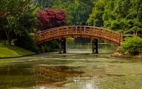 Картинка зелень, солнце, деревья, мост, пруд, парк, США, Missouri Botanical Garden