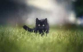 Картинка трава, котенок, grass, kitten, Анна Яркова
