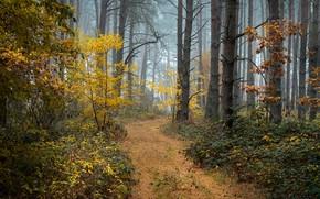 Картинка осень, лес, деревья, туман, Radoslaw Dranikowski