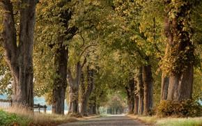 Картинка дорога, деревья, лесополоса