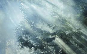 Картинка лес, лучи, свет, деревья, ветки, природа, утро