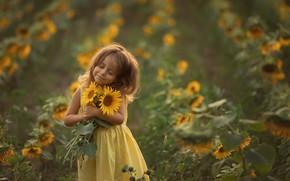 Картинка поле, лето, подсолнухи, природа, букет, платье, девочка, ребёнок, Chudak Irena
