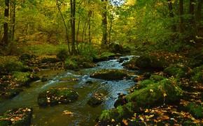 Картинка осень, лес, вода, деревья, река, камни
