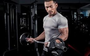 Картинка gym, training, arms, bodybuilder