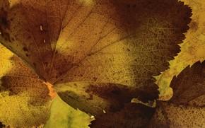 Картинка листья, макро, текстура, Martin Dollenkamp
