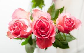 Картинка розы, букет, лепестки