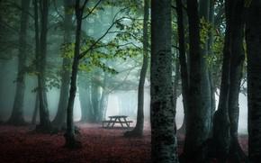 Картинка осень, туман, парк, скамья