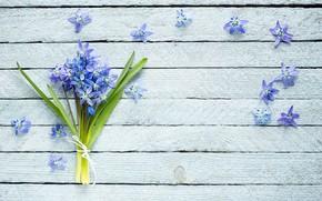 Картинка цветы, букет, фиалки