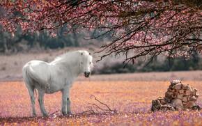 Картинка цветы, ветки, дерево, лошадь, белая, цветение