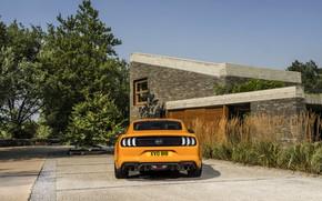 Картинка Ford, 2018, стоянка, фастбэк, Mustang GT 5.0, корма, оранжевый