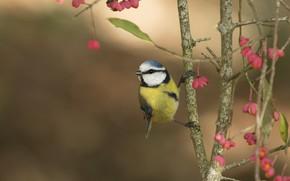 Картинка ветки, птица, птичка, цветочки